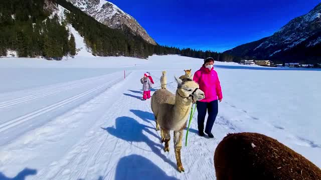 Gschnitzer Alpaka Winterwanderung  02:50