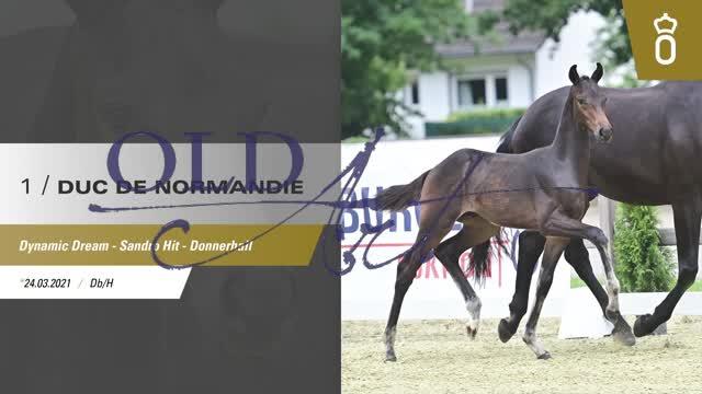 01 Duc de Normandie DE433330132421 FoED Dynamic Dream - Sandro Hit_1  01:06