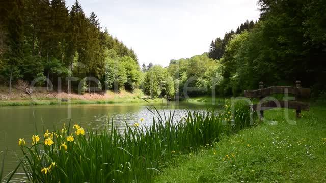 Natur Clip idyllischer Waldsee  01:22 | Video Sequenz: idyllische Natur, aufgenommen am Waldsee bei Tettscheid in der Eifel (Vulkaneifel)