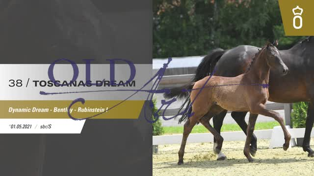 38 Toscanas Dream DE433330535321 FoED Dynamic Dream - Bentley_1  00:53