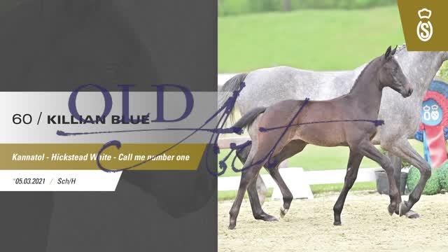 60 Killian Blue DE4181805597210 SE-Fo Kannatol - Hickstead White_1  01:05