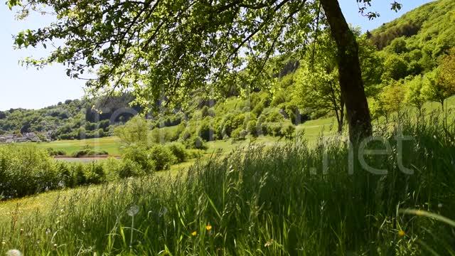 Meerfeld, am Meerfelder Maar  00:33 | Videosequenz, Sommerwiese mit sich im Wind wiegenden Gräsern, aufgenommen am Meerfelder Maar in Meerfeld